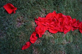Tableau de pétales de roses rouge sur fond de mousse stabilisée