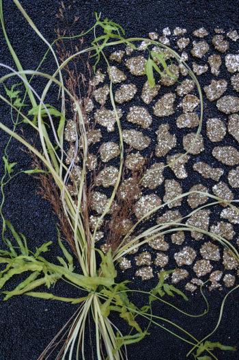 Tableau de pétales de céréales sur fond de colza