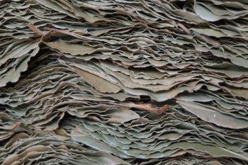 Tableau d'empilage de feuilles de lauriers et pétales de roses stabilisées